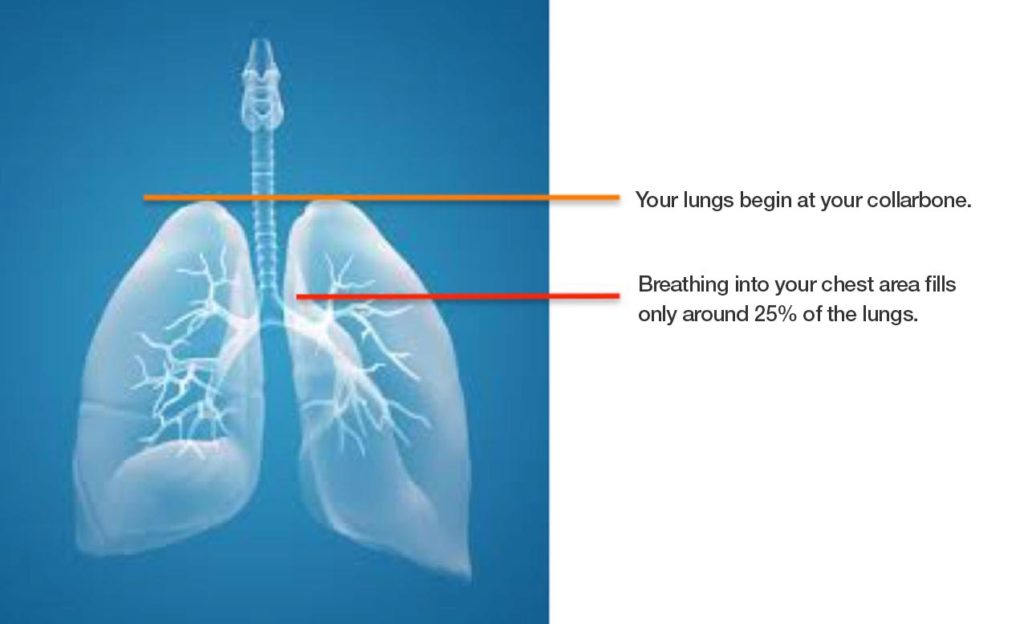 Your lungs begin at your collarbone. Breathing into your chest area fills only around 25% of the lungs.