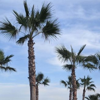 Palm trees placeholder