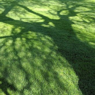 Tree shadow placeholder